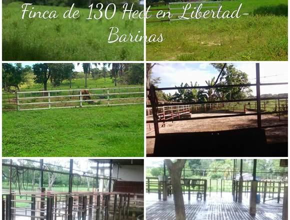 FINCA DE 130 HECTÁREAS LIBERTAD BARINAS