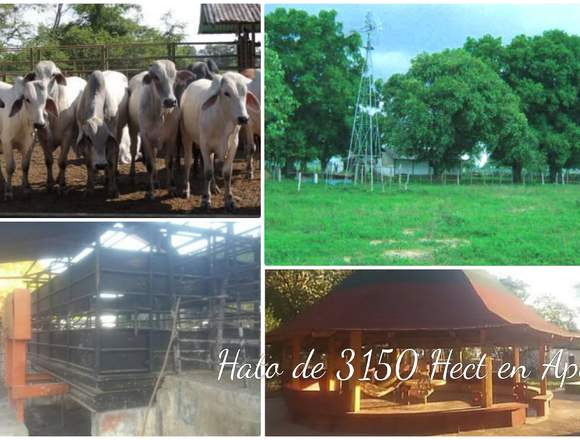 HATO DE 3150 HECTÁREAS CON 3.000 RESES