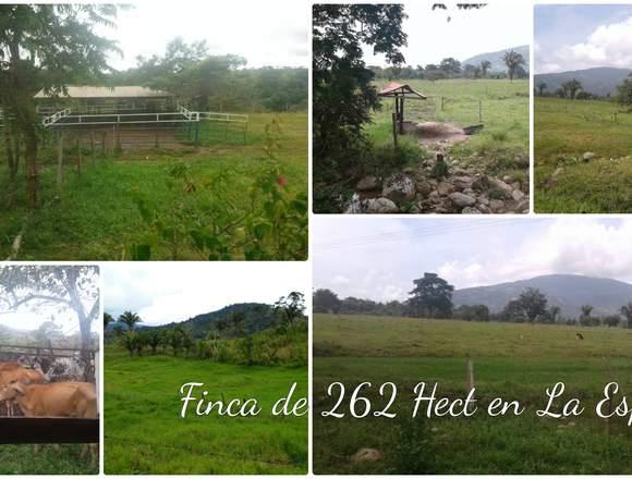 FINCA DE 262 HECTÁREAS SANTO DOMINGO TACHIRA