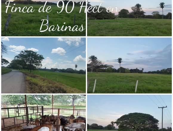 FINCA DE 90 HECTÁREAS BARINAS