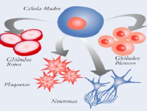 Autohemoterapia Med. Celular Med. Orthomolecular