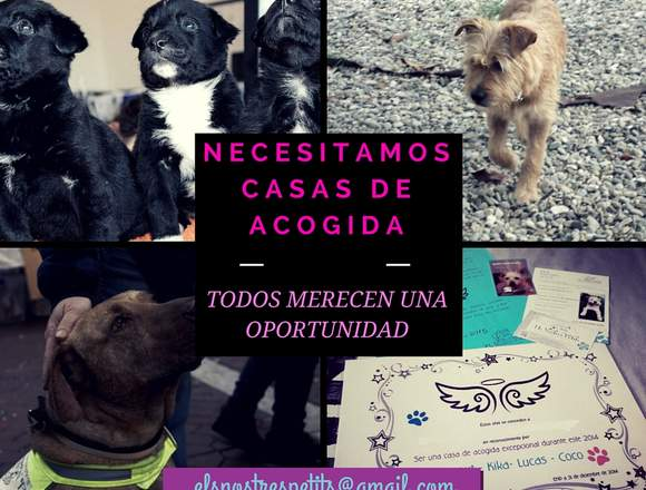 ELS NOSTRES PETITS BUSCA CASAS DE ACOGIDA