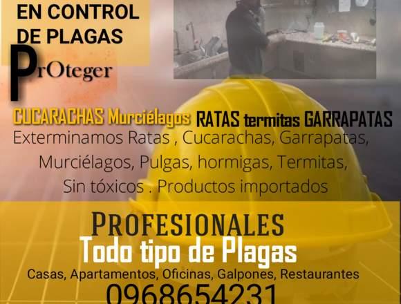 FUMIGACIONES EXPERTOS EN MURCIÉLAGOS RATAS INSECTO