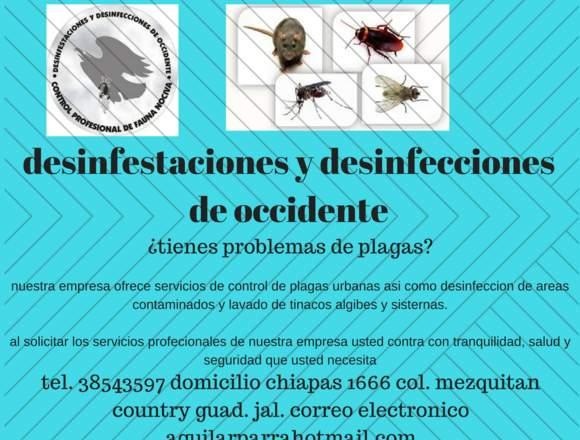 servicio profesional de control de plagas urbanas
