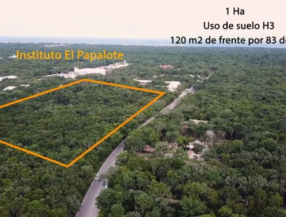 Terreno de 1 hectárea en venta en Playa del Carmen