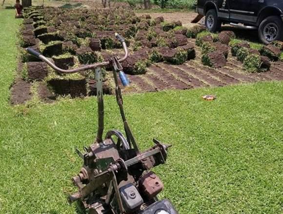 PASTO EN ROLLO y tierra de jardin CUERNAVACA