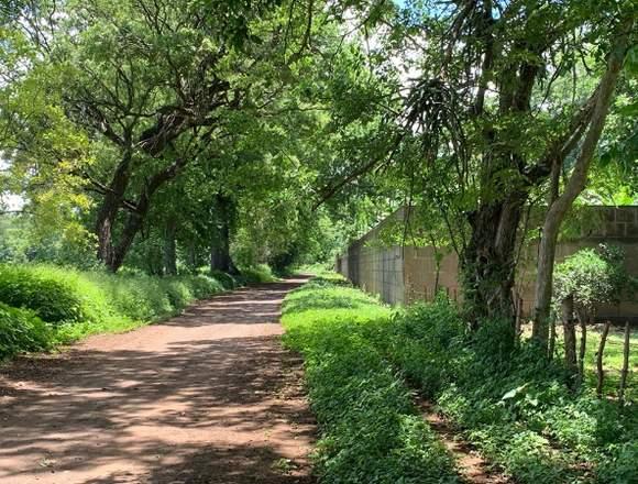 Venta de Lotes - Terrenos - Parcelas en Masaya.