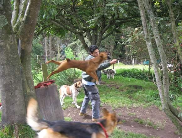 Adiestramiento Canino y Correccion de Conducta