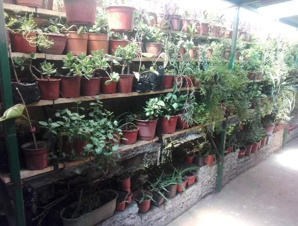Se venden plantas de jardín