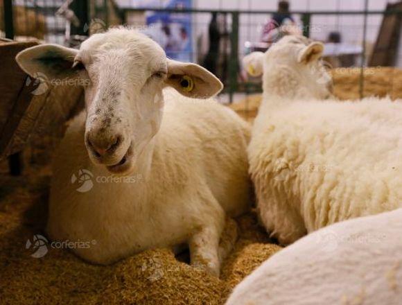 Gran Feria Agropecuaria AGROEXPO 2019