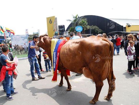 Feria Agropecuaria AGROEXPO 2019