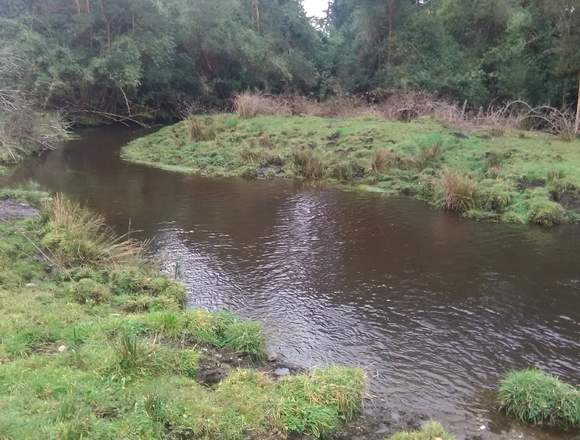 Osorno,terreno de 13,10 hectáreas