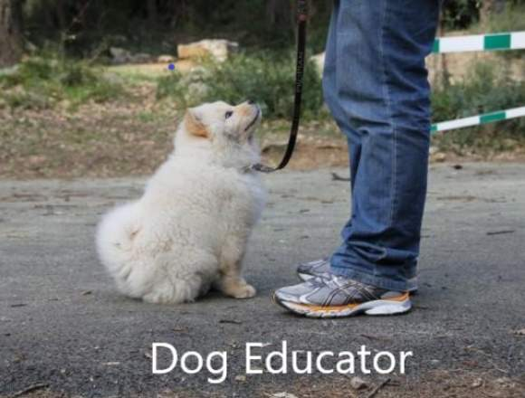 Dog Educator - Canine Psychologist