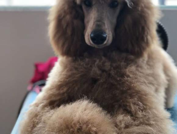 Curso De Peluquería, Estética Canina y Felina