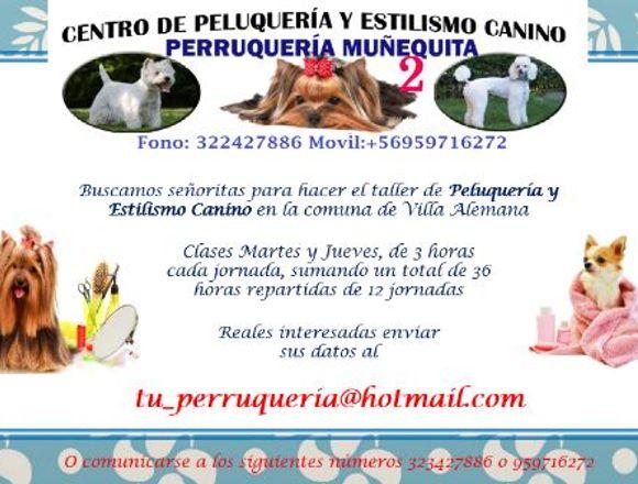 TALLER DE PELUQUERÍA Y ESTILISMO CANINO|