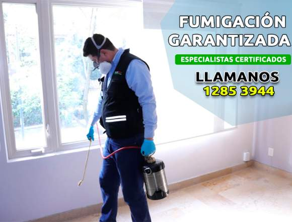 Fumigaciones fumired, solución garantizada