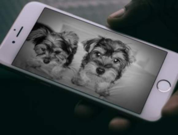 Furbo Dog Camara para perros