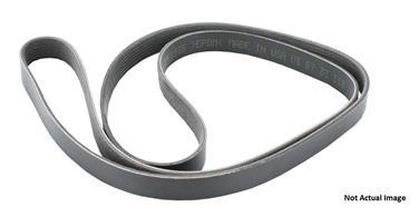 2010 Volkswagen Jetta Serpentine Belt CRUISER ACCESSORIES PK050365
