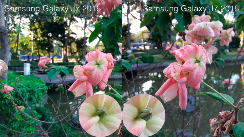 Samsung-Galaxy-J7-2016-vs-2015-flower-camera-sample-philippine