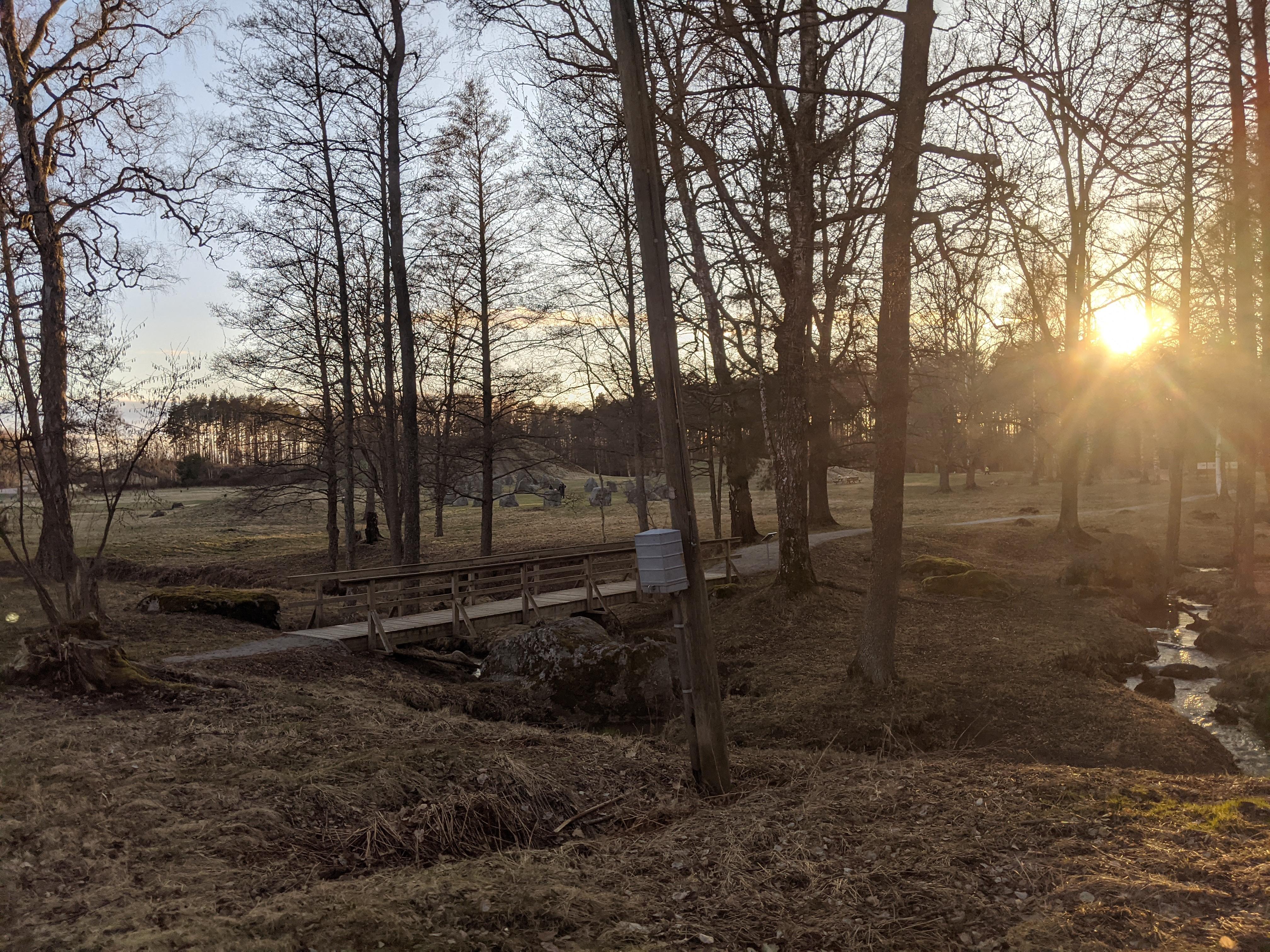Anundshögsområdet i solnedgång mellan träden