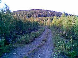 Skogsvägsmys