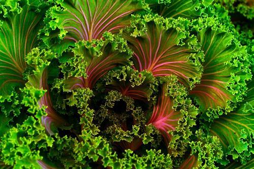 Kale omega 3 fatty acids