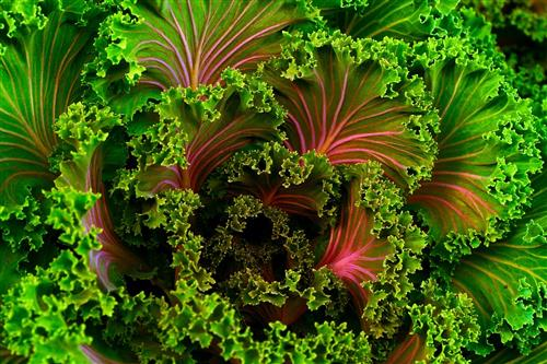 Kale for anti-aging skin care