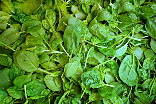 Spinach Vitamin E food recipes