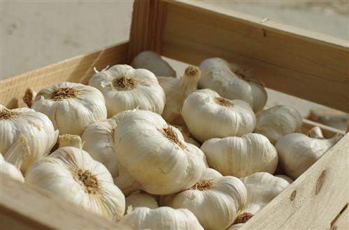Never use garlic skin care