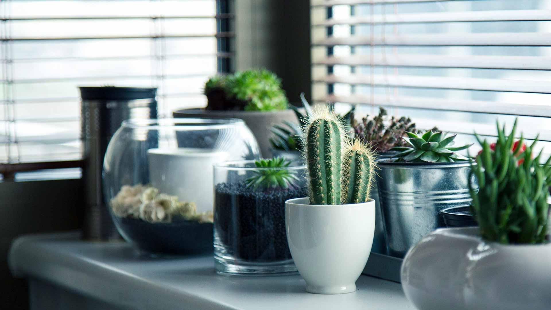 plantas que cuidan de tu salud