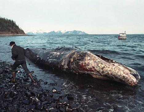 Oil Whale Exxon