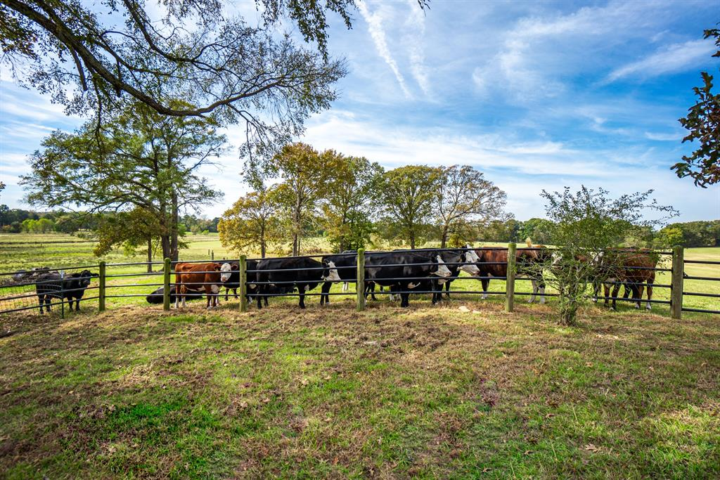4650 Hwy-144  Daingerfield, Texas 75638 - acquisto real estate best realtor foreclosure real estate mike shepeherd walnut grove realtor