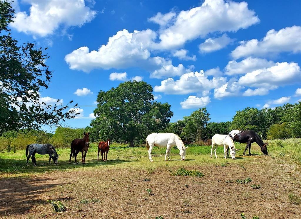 610 CR 4005  Savoy, Texas 75479 - acquisto real estate best park cities realtor kim miller best staging agent