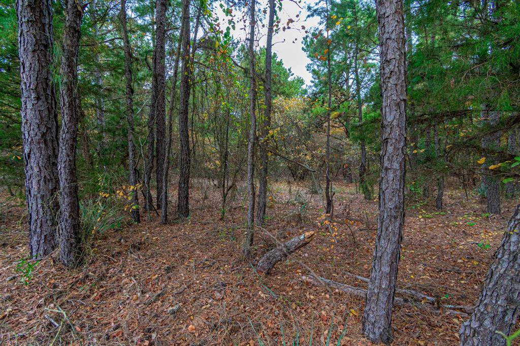16543 County Road 3147 Tyler, Texas 75706 - acquisto real estate best new home sales realtor linda miller executor real estate