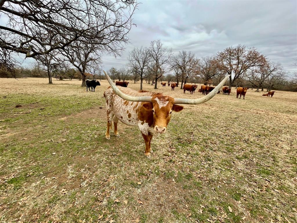 000 Lester Road, Jacksboro, Texas 76458 - acquisto real estate best listing listing agent in texas shana acquisto rich person realtor