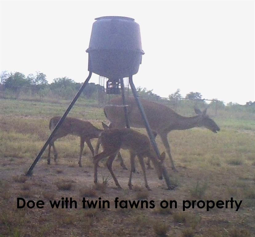 410 County Rd 2710 Honey Grove, Texas 75446 - acquisto real estate mvp award real estate logan lawrence