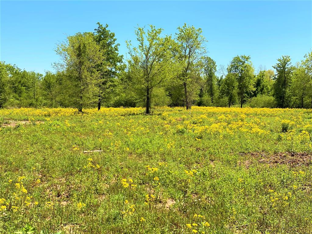 9891 Farm Road 906  Paris, Texas 75473 - acquisto real estate best looking realtor in america shana acquisto