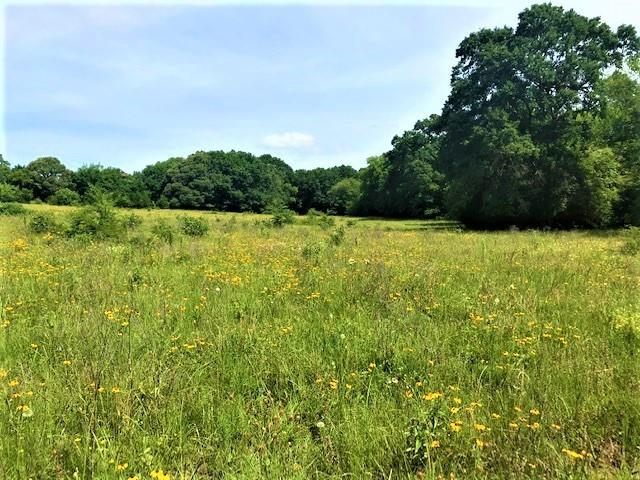 741 VZ County Road 1222 S  Grand Saline, Texas 75140 - acquisto real estate best frisco real estate agent amy gasperini panther creek realtor