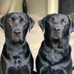 Rocky & Oakley 🐾