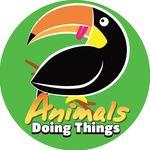 Animals Doing Things