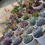Atili's succulent collection