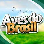 Aves do Brasil OFICIAL 🎶🐦