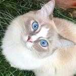 beautiful__cats