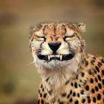 Best of animals | wildlife