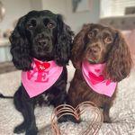 Binky & Bailey