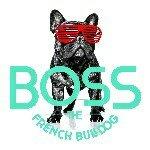 Boss The French Bulldog