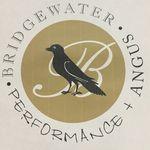 Bridgewater Angus