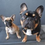 Brooklyn & Lilly The Frenchies
