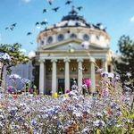 🇹🇩 Bucharest