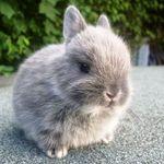 Bunny_daily 🐰💕
